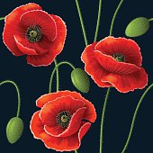 Seamless pattern with red poppy flowers and buds on dark.