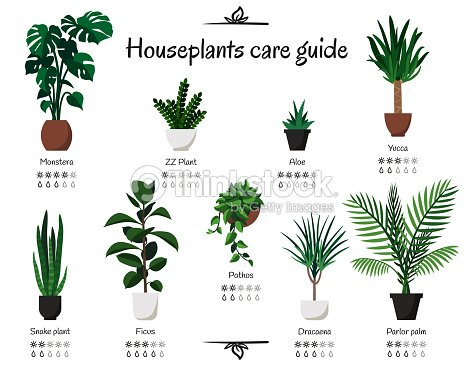 Popular, common houseplants care guide. Vector isolated collection of various indoor ornamental plants with watering and lighting norms : stock vector