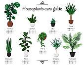 Monstera, parlor palm, ficus, pothos, aloe, snake plant, yucca