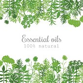 Popular essential oil plants label set. green silhouettes. Flat style. Peppermint, lavender, sage, melissa, Rose, Geranium, Chamomile, oregano For cosmetics spa health care aromatherapy advertising