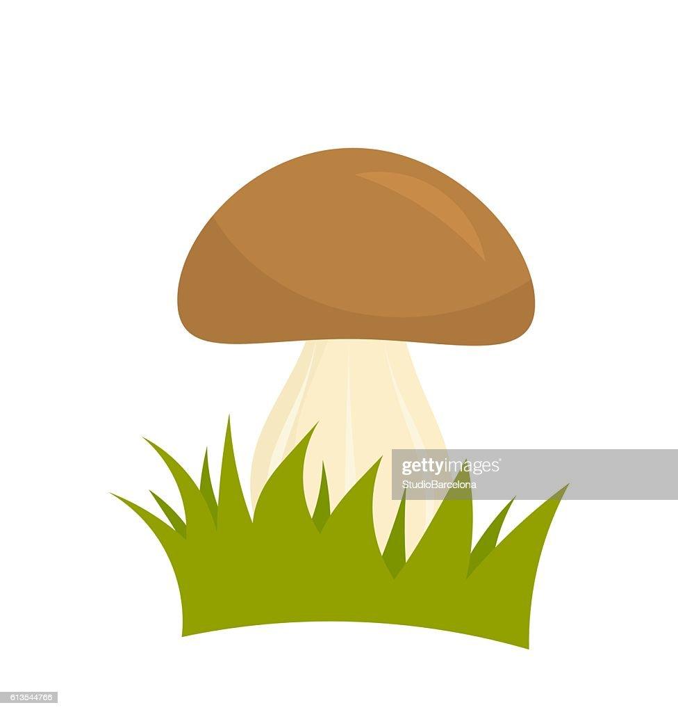 Porcini mushroom in grass