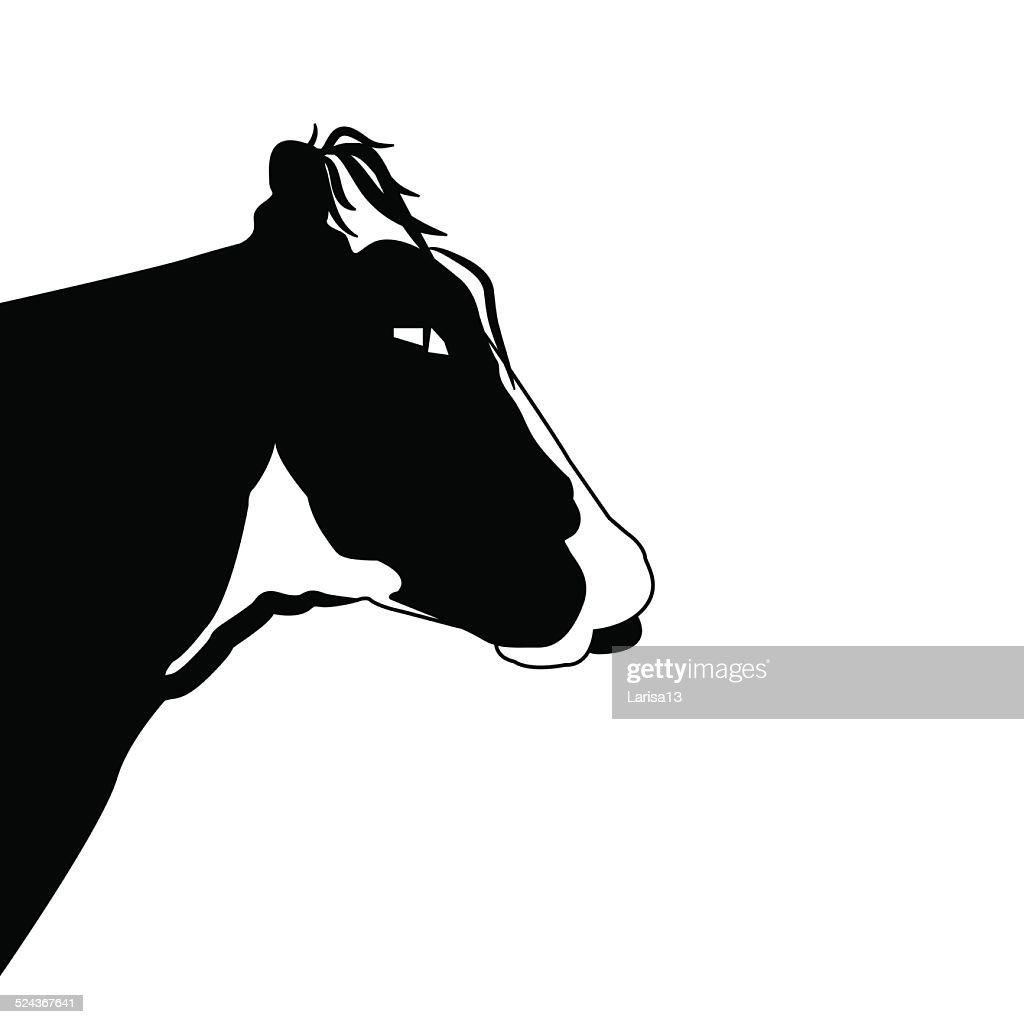 Black Cow Rides White