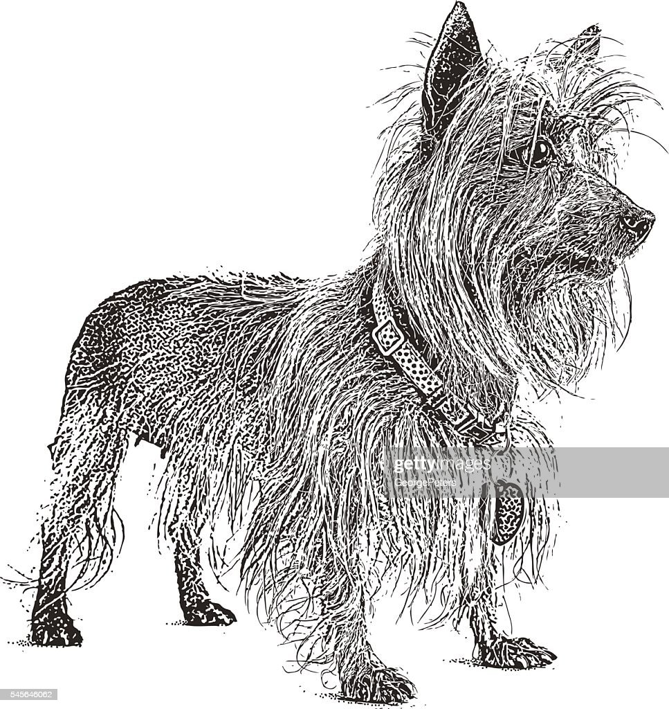 silky dog white. portrait of a silky terrier and dachshund mixed dog : vector art white