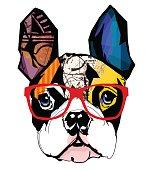 Portrait of french bulldog wearing sunglasses - Vector illustration