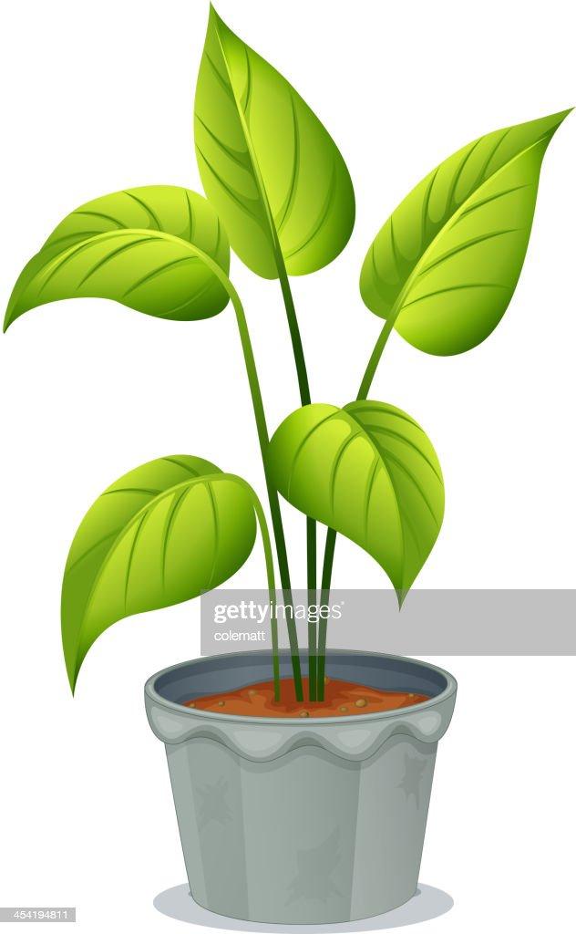Olla de verde de la planta : Arte vectorial