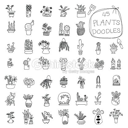 Potted Plants doodles drawing : stock vector