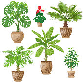 Potted tropical Plants Set.  Palm trees, banana plant, Anthurium, ficus, washingtonia, monstera in flowerpots isolated on white. Vector flat illustration.