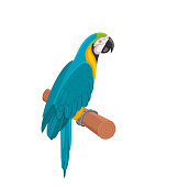 Illustration Pretty Blue Parrot Ara on Branch. Bird Isolated on White Background. Endangered Animal - Vector