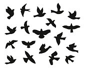 Set of bird flying silhouettes. Vector illustration.
