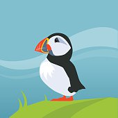 Puffin Bird In Iceland Flat Bright Color Simplified Vector Illustration In Realistic Cartoon Style Design