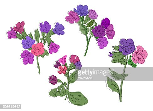 Pulmonaria flowers card backgrounds. Hand drawn vector illustration : Vector Art