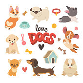 Vector illustration of cute cartoon different breeds dogs, such as Corgi, French Bulldog, pug, Beagle, Labrador, Chihuahua and Dachshund. Isolated on white.