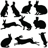 rabbit silhouettes on the white background, vector illustration