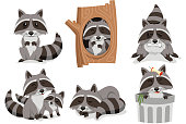 Raccoon Raccoons Set, with standing raccoon, raccoon inside tree, angry raccoon, family raccoon, sleeping raccoon and raccoon inside trash can.  Vector illustration cartoon.