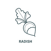 Radish vector line icon, outline concept, linear sign
