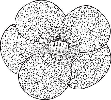 Elemento Aislado Del Vector De Flores Tropicales De Rafflesia Página ...
