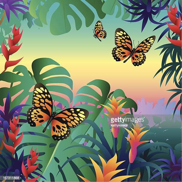 Regenwald-Schmetterlinge