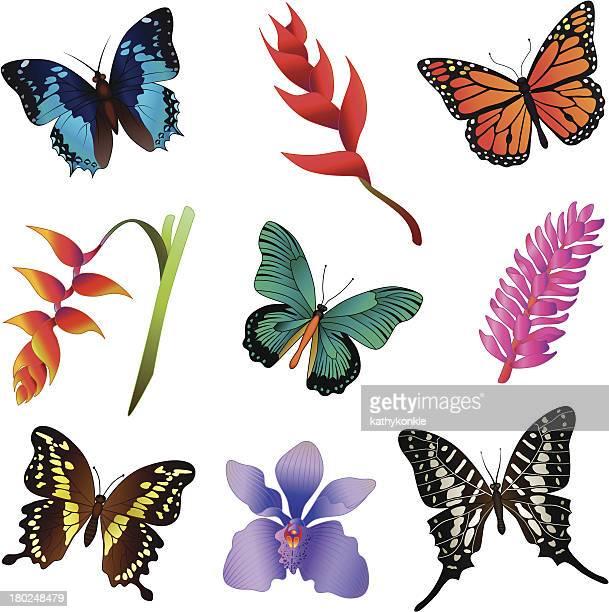 Regenwald Blumen und Schmetterlinge