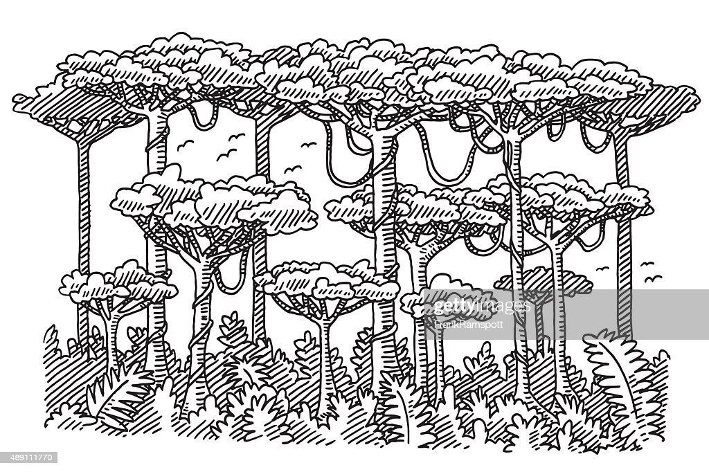 Rainforest Trees Drawi...