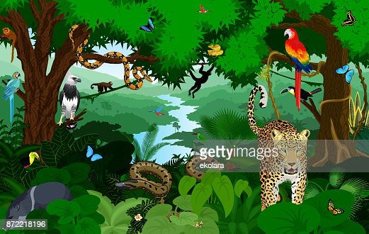 Regenwald mit Tieren-Vektor-Illustration. Vector Green Tropical Forest Dschungel mit Papageien, Jaguar, Boa, Peccary, Harpyie, Affe, Frosch, Tukan, Anakonda und Schmetterlinge. : Vektorgrafik