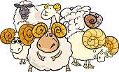 Cartoon Illustration of Ram or Sheep Farm Animal Characters