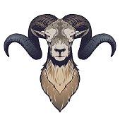 Ram head illustration in vector