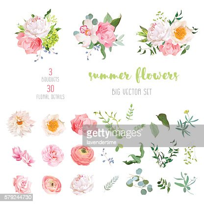 Ranunculus, rose, peony, dahlia, camellia, carnation, orchid, hydrangea vector collection : stock vector