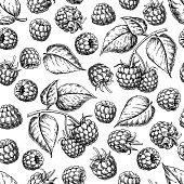 Raspberry seamless pattern. Vector drawing. Isolated berry branch sketch on white background.  Summer fruit engraved style background. Detailed hand drawn vegetarian food. Great for packaging design,
