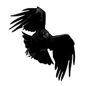 Raven (Corvus corax). Hand drawn vector silhouette of flying attacking raven, detailed in gray.