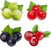 Realistic berries set with cranberry, red currants, gooseberry and black currant on white background isolated illustration.