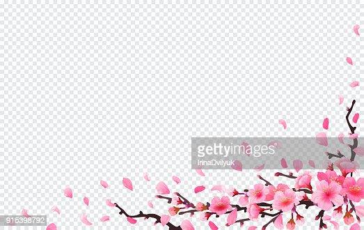 Realistic sakura japan cherry branch : stock vector