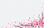 Realistic sakura japan cherry branch with blooming flowers. Spring fresh pink design on transparent background. flying downwind petals on wind. Vector illustration stock vector.