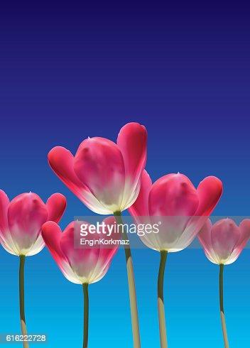 Realistic vector 3D tulips : Vector Art
