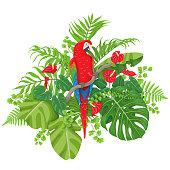 Colorful floral bunch with green leaves and flowers of tropical plants and bird isolated on white. Red-and-green macaw sitting on liana branch. Vector flat illustration.