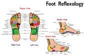 Illustration of a Reflexology Foot Chart