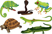 reptiles and amphibians photo realistic vector set