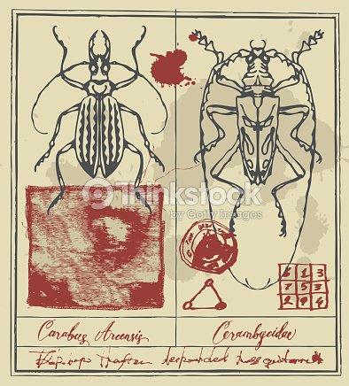 Retro Banner Con Dibujos Detallados De Escarabajos Arte vectorial ...