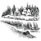 Black and white vector illustration of river landscape with forest. Bank of the river with reed, cattail trees and firs. Sketchy style.