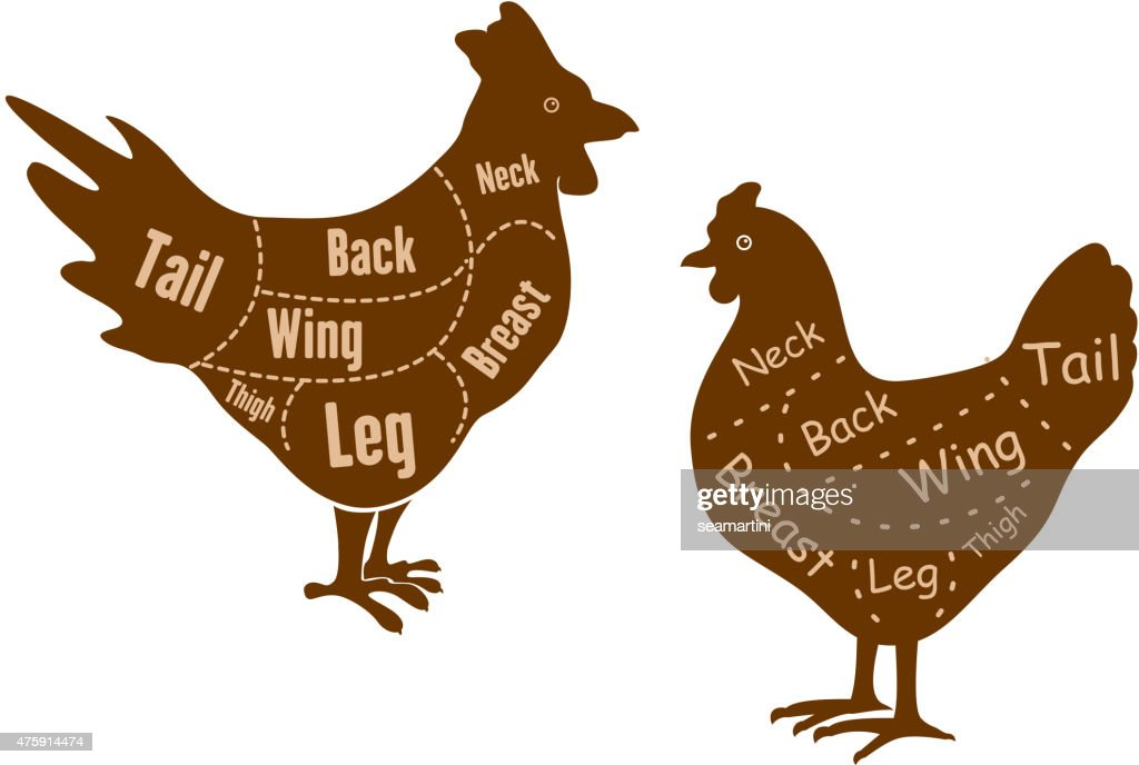 Diagrams Of A Chicken Neck S - Auto Wiring Diagram Today •