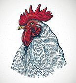 Vector illustration rooster head in graphic style and painted in color.