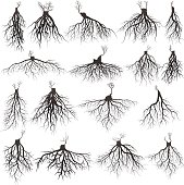 Set of tree roots with germinate limb. roots silhouette vector Illustration.