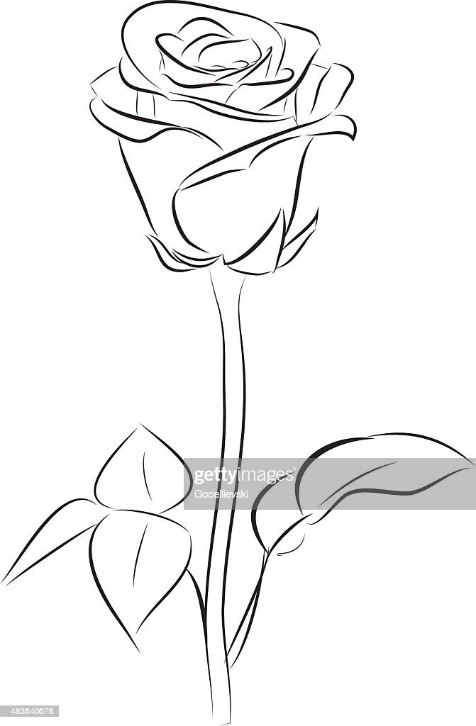 rose line art vector art thinkstock rh thinkstockphotos com rose arterial line rose line artwork