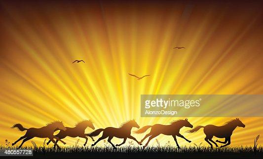 Running Wild Horses : Vector Art