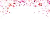 Sakura flowers on white backround. Vector.