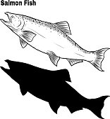 Salmon art highly detailed in line art style. Fish vector by hand drawing. Fish tattoo on white background. Black and white fish vector on white background. Salmon fish sketch for coloring book.