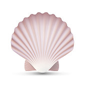 Scallop Seashell Vector. Realistic Sea Shell Close Up. Isolated On White. Illustration