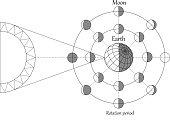 Sciense moon phases scheme, lunar calendar vector background