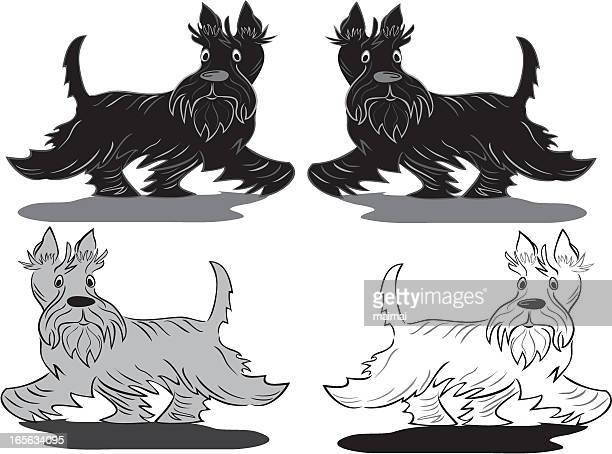Scottish Terrier Walking By.