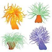 Illustration of the sea anemone - sea flower