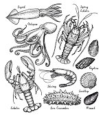 Seafood ink sketch. Isolated on white background. Hand drawn vector illustration. Retro style.